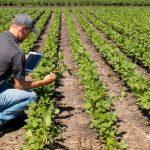 Cómo convertirse en un empresario agrícola: requisitos requeridos e instalaciones proporcionadas